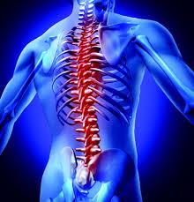 Spinal Bones image 2