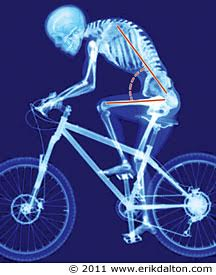 Skeleton Biking Posture